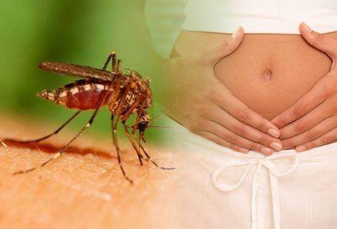 11 người đã mắc virus Zika tại TP HCM