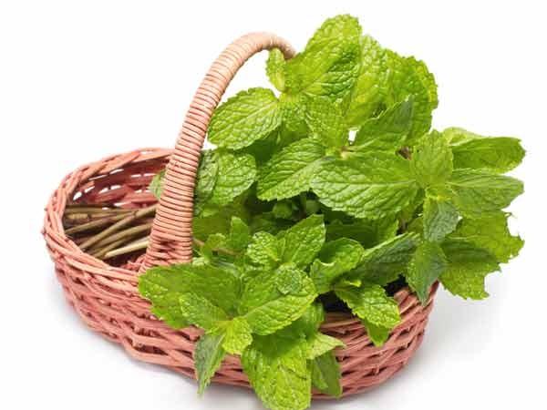 5 loại rau thơm có tác dụng chữa bệnh dễ kiếm