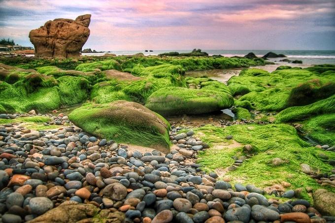 Ngắm cảnh đẹp mê ly mùa rêu xanh phủ tràn bãi đá ở Bình Thuận
