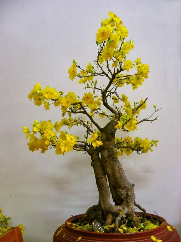 Những loại cây, quả hút tài lộc ngày Tết