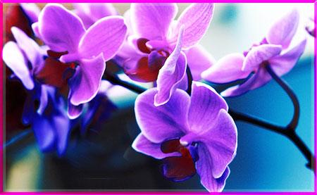 Tìm hiểu ý nghĩa của các loài hoa